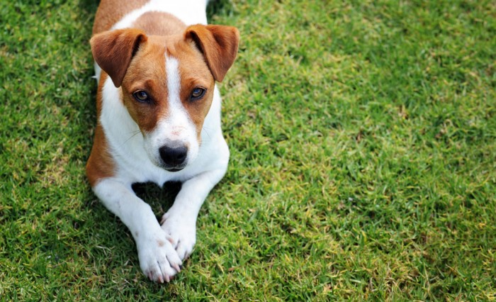 Stockfoto eines Hundes